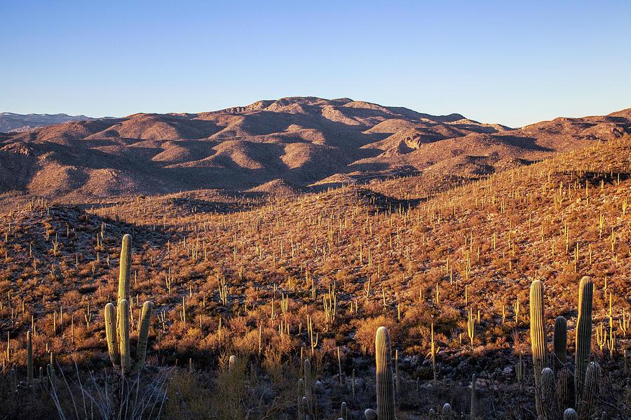 Saguaro Hills by Lon Dittrick