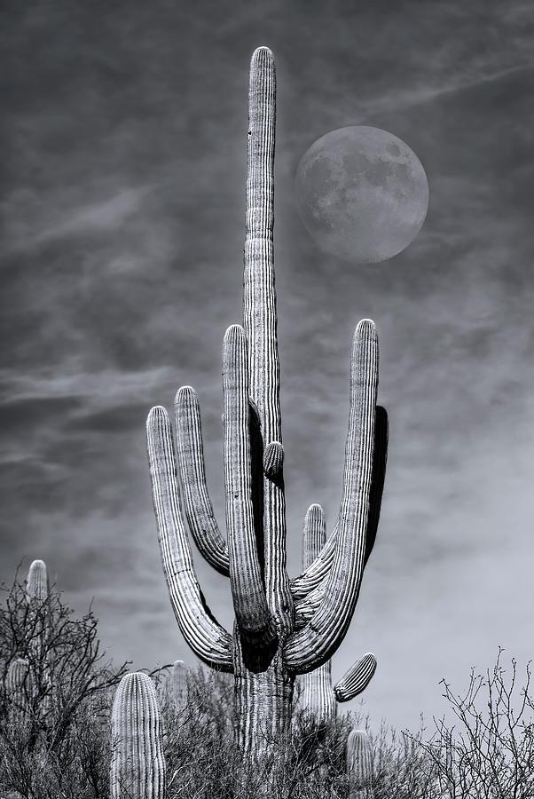 Saguaro Moon m1134 by Mark Myhaver
