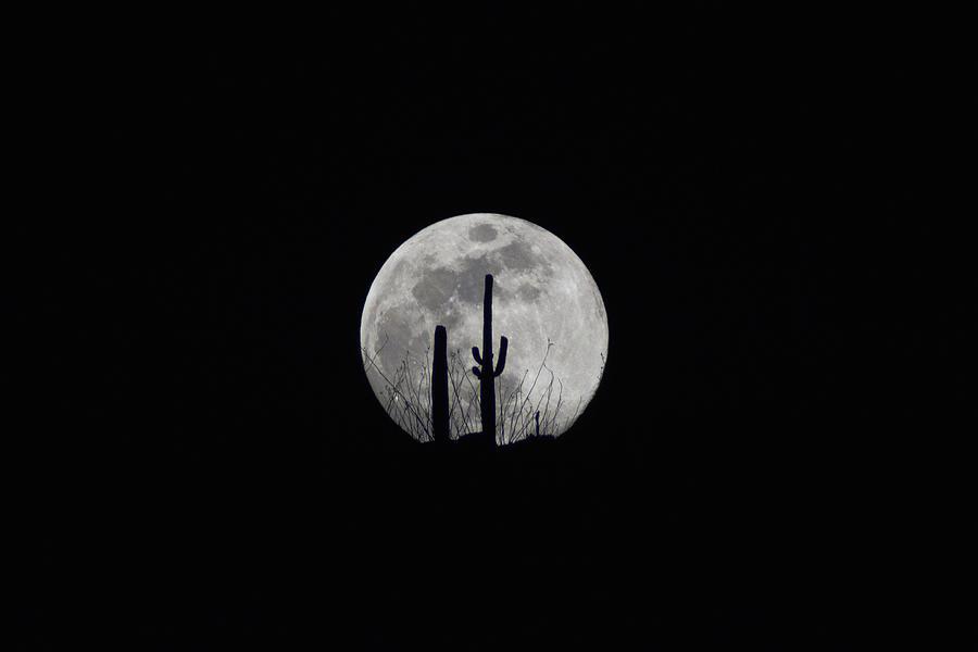 Saguaro Moon Silhouette  by Chance Kafka