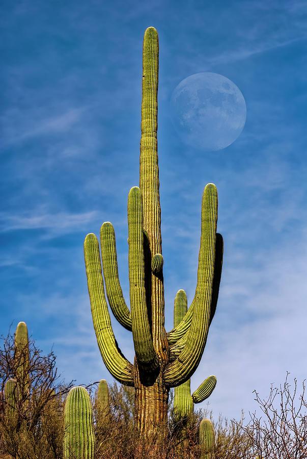 Saguaro Moon v1133 by Mark Myhaver
