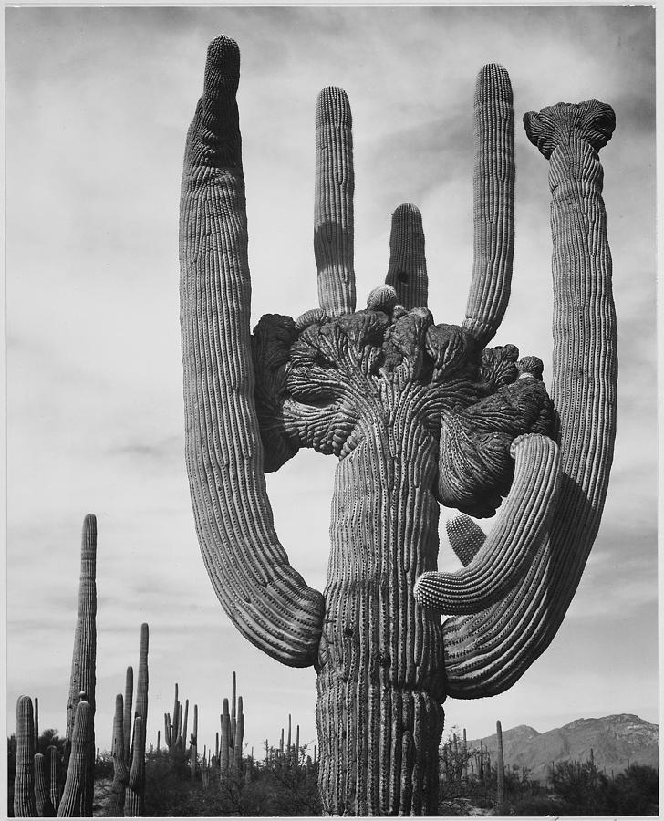 Saguaro National Monument Photograph by Buyenlarge