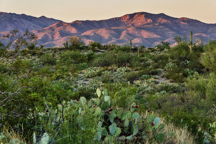 Saguaro National Park Dusk by Wes and Dotty Weber