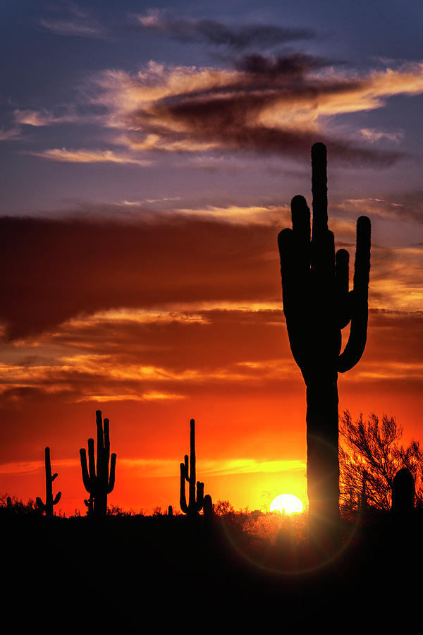 Saguaro Sunset Photograph - Saguaro Silhouette Sunset 102 by Saija Lehtonen