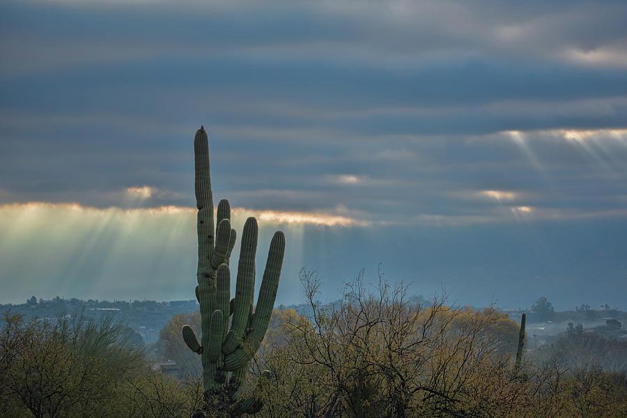 Saguaro Sun Rays by Dan McManus