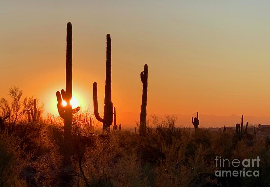 Saguaro Sunset by Sean Griffin