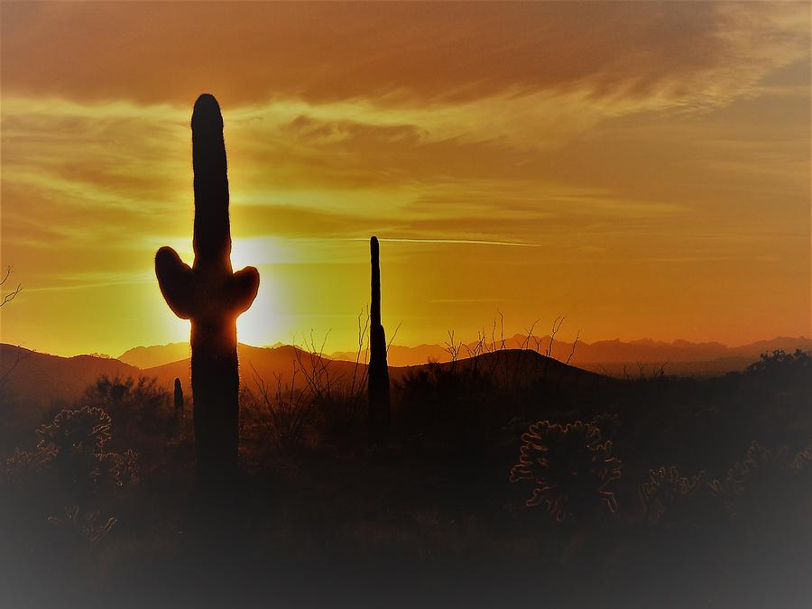 Saguaro Sunset by Tranquil Light Photography
