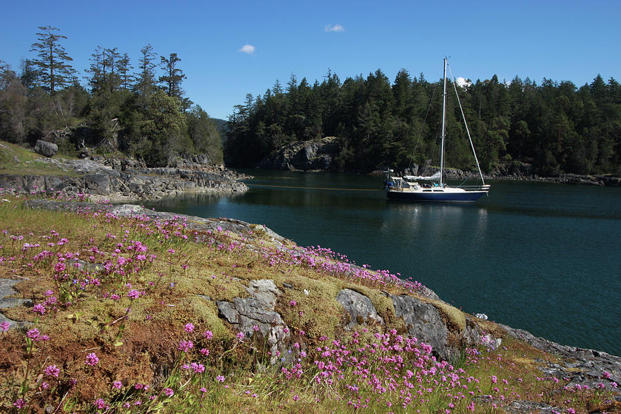Sailboat at Anchor in a Scenic Bay by Pacific Northwest Sailing