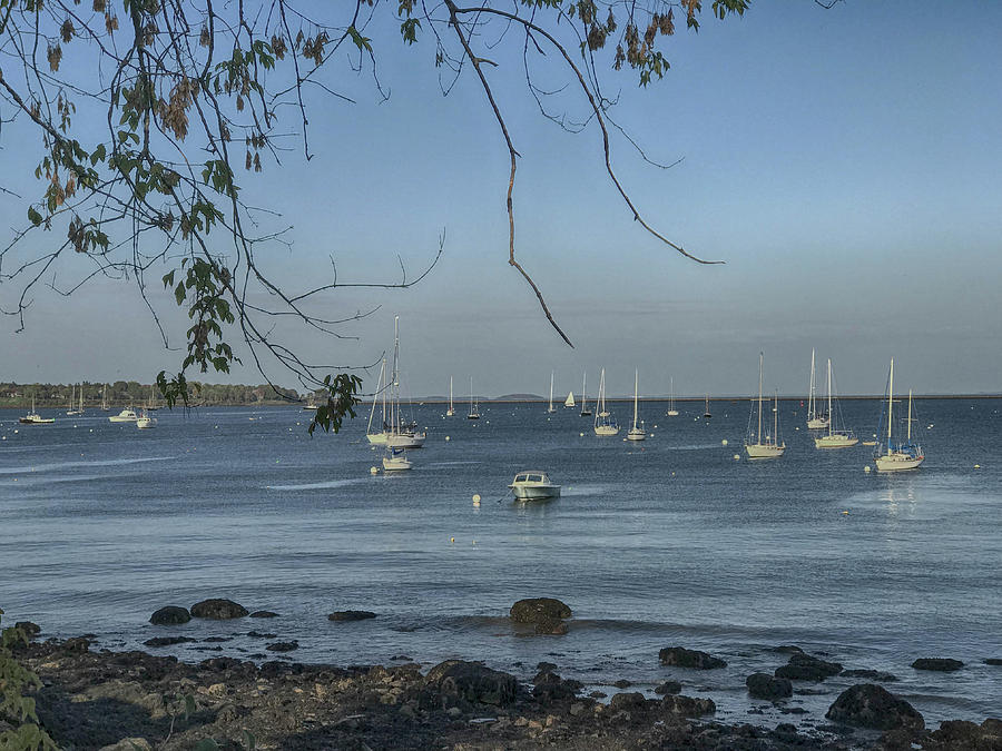 Sailboats in Rockland Harbor by Pamela Hodgdon