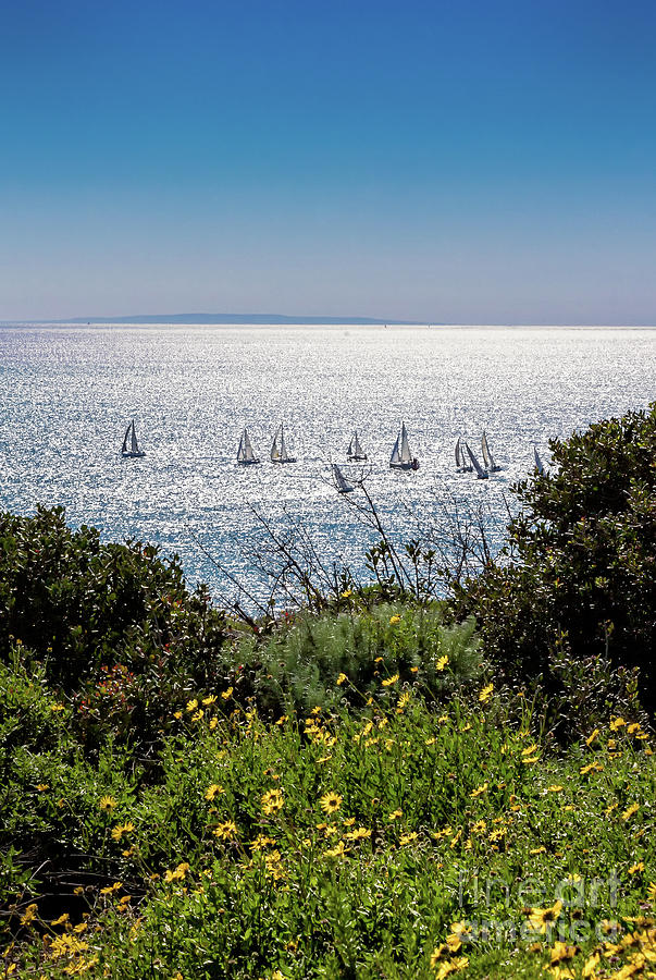 Sailboats off the Cliff Dana Point by Stefan H Unger
