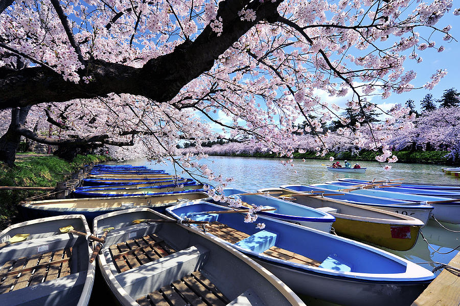 Sakura Boats Hirosaki Japan Photograph by Photo By Glenn Waters In Japan
