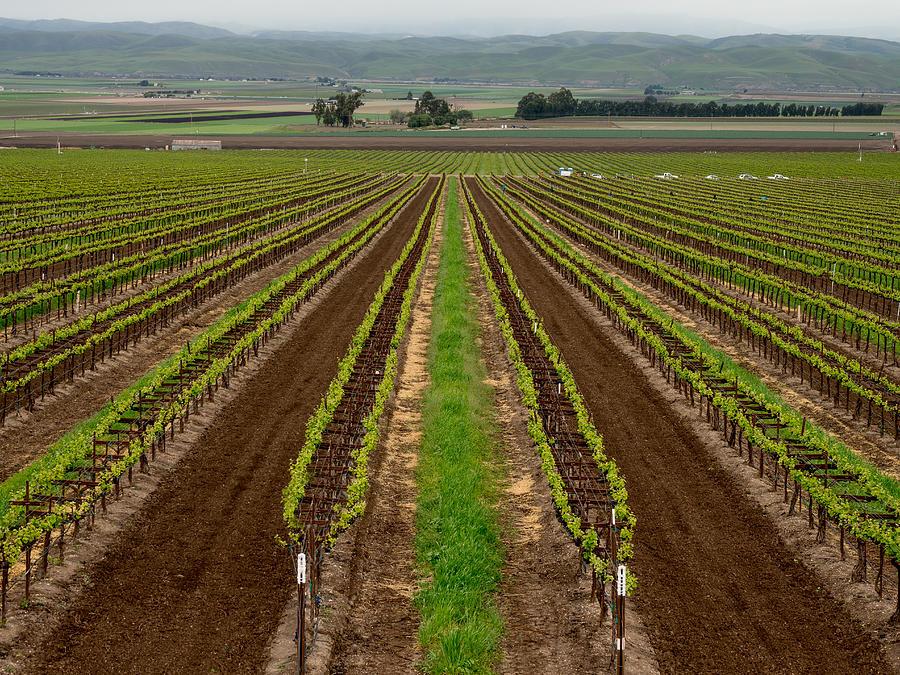 Salinas Valley Vineyard by Derek Dean