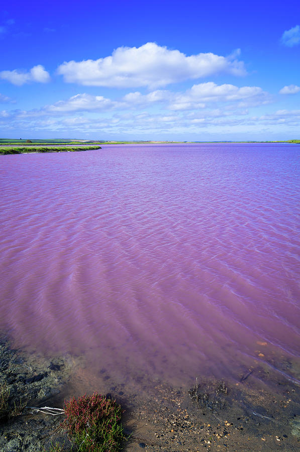 Saline Pink Lake Of Coorong, South Photograph by Whitworth Images