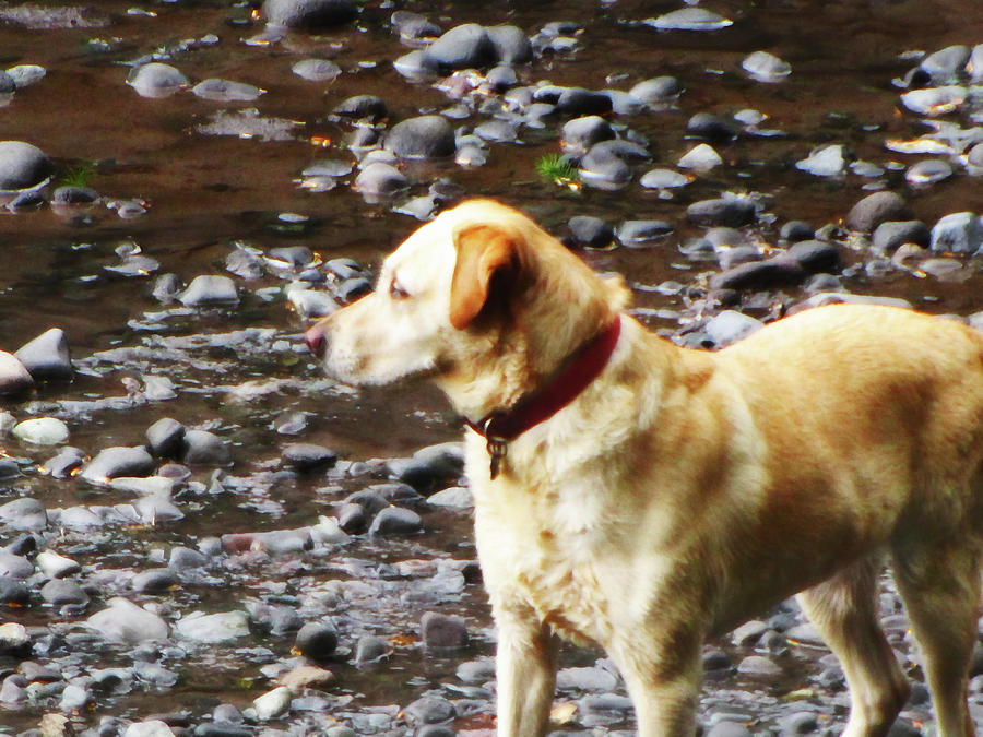 Salmon Hunting Dog by Tikvah's Hope