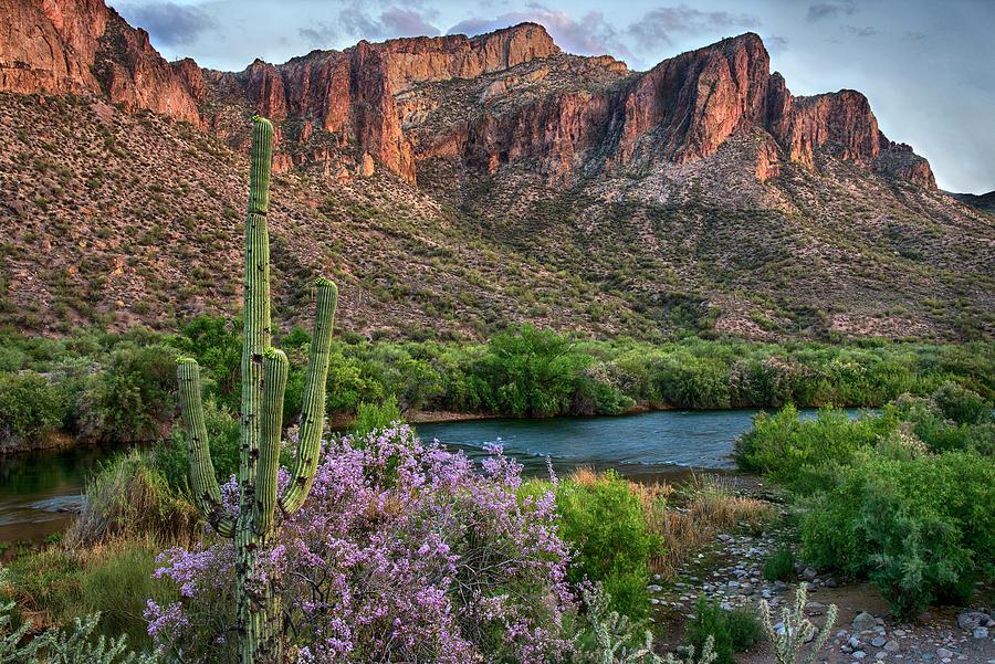 Arizona Photograph - Salt River Saguaro and Ironwood blooms by Dave Dilli