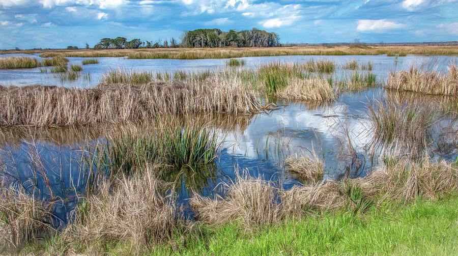Saltwater Marsh Landscape by Marcy Wielfaert