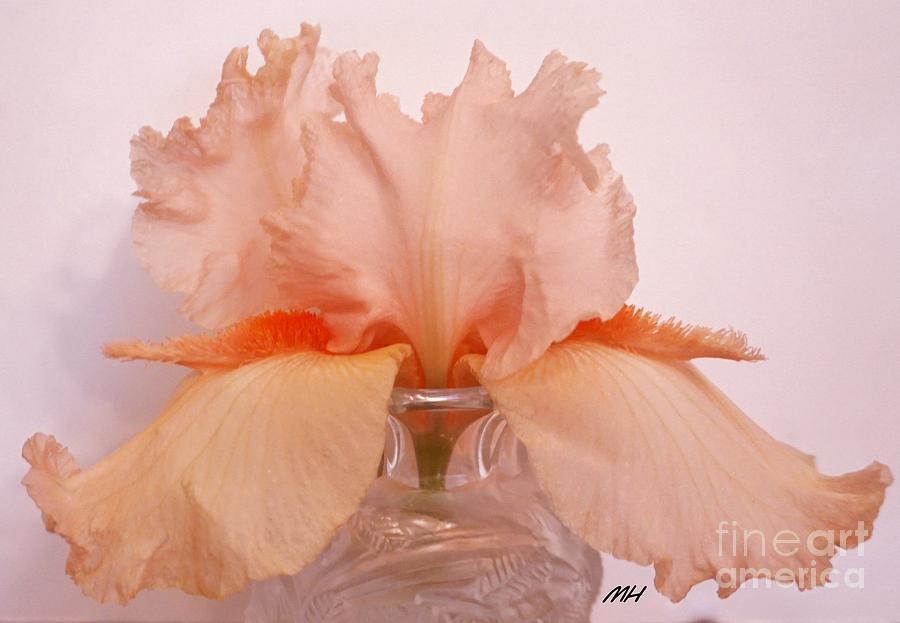 Photo Photograph - Salvador Dali Bearded Iris by Marsha Heiken