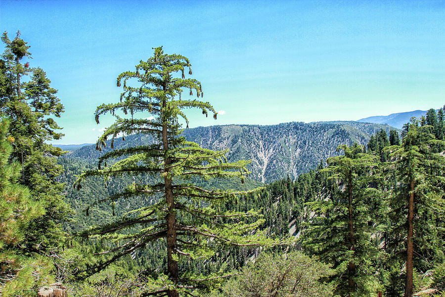 San Bernardino Mountains 3 by Robert Hebert