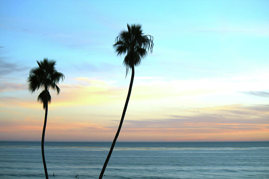 Palm Tree Photograph - San Diego Sunset by Alina Avanesian