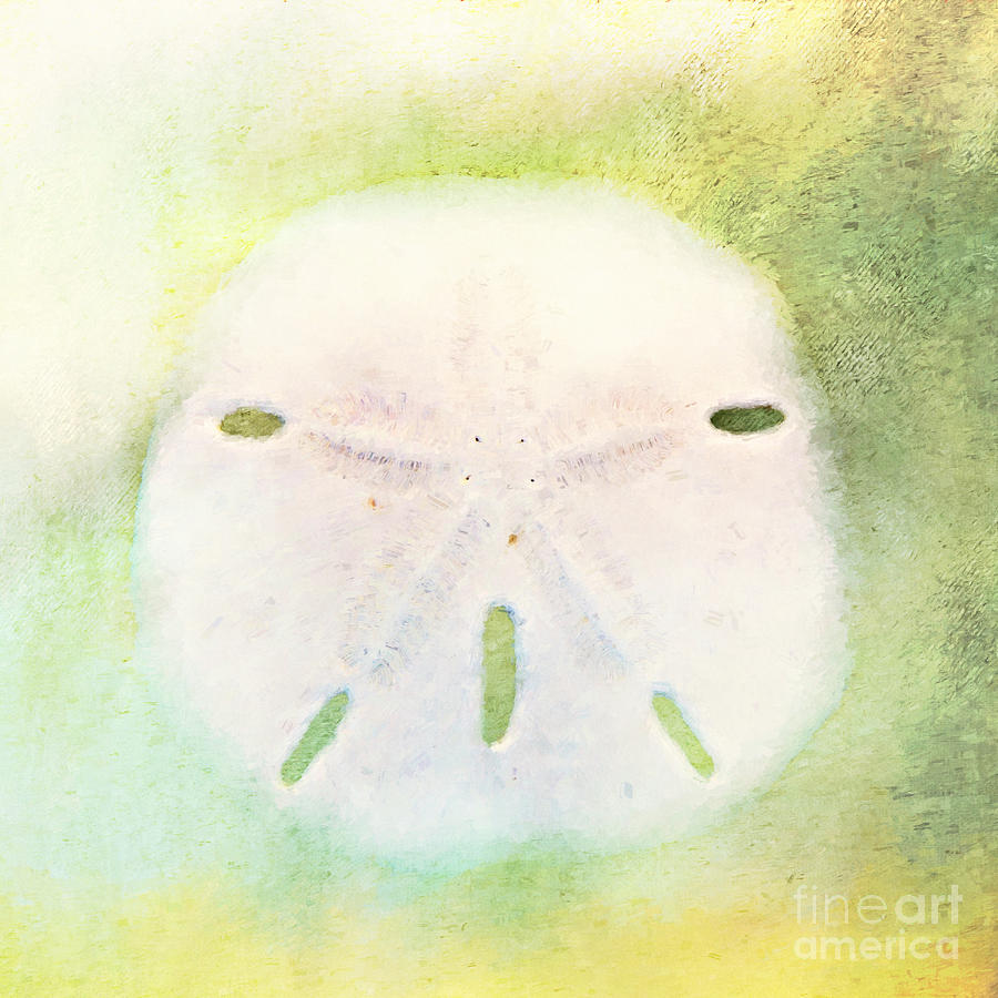 Sand Dollar by Pam  Holdsworth