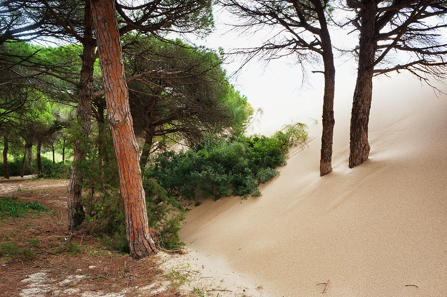 Sand Drifting Up Onto Tree Trunks At Photograph by Ben Welsh / Design Pics