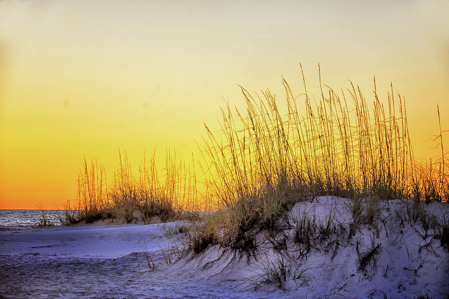 Sand Dunes at Sunset by Jolynn Reed