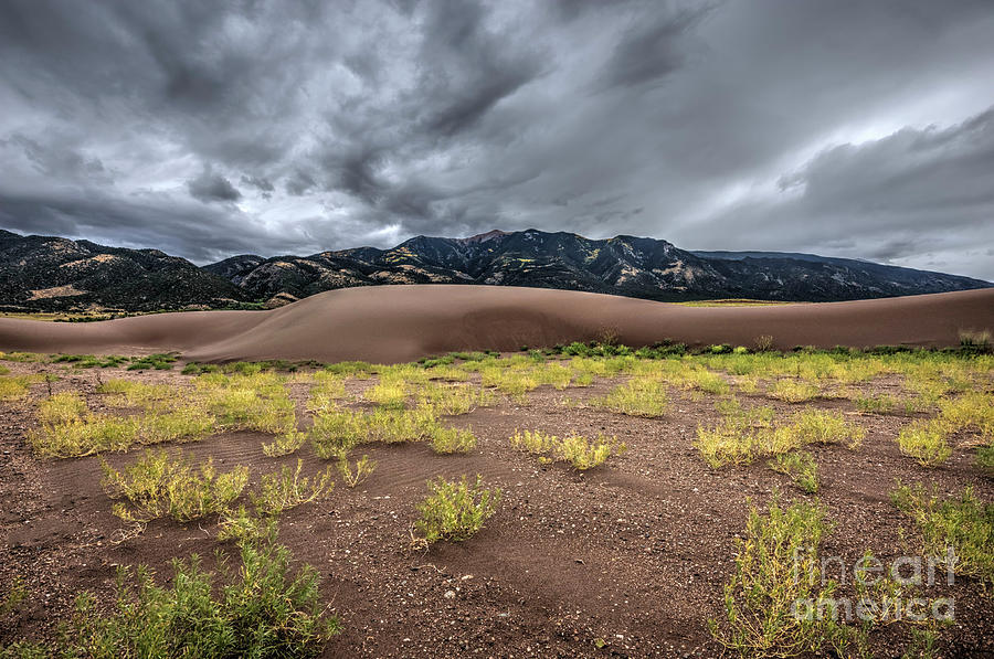 Yellow Photograph - Sand Dunes by Joe Sparks