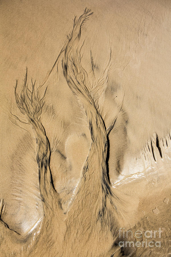 Sand Photograph - Sand Trees by Sheila Smart Fine Art Photography
