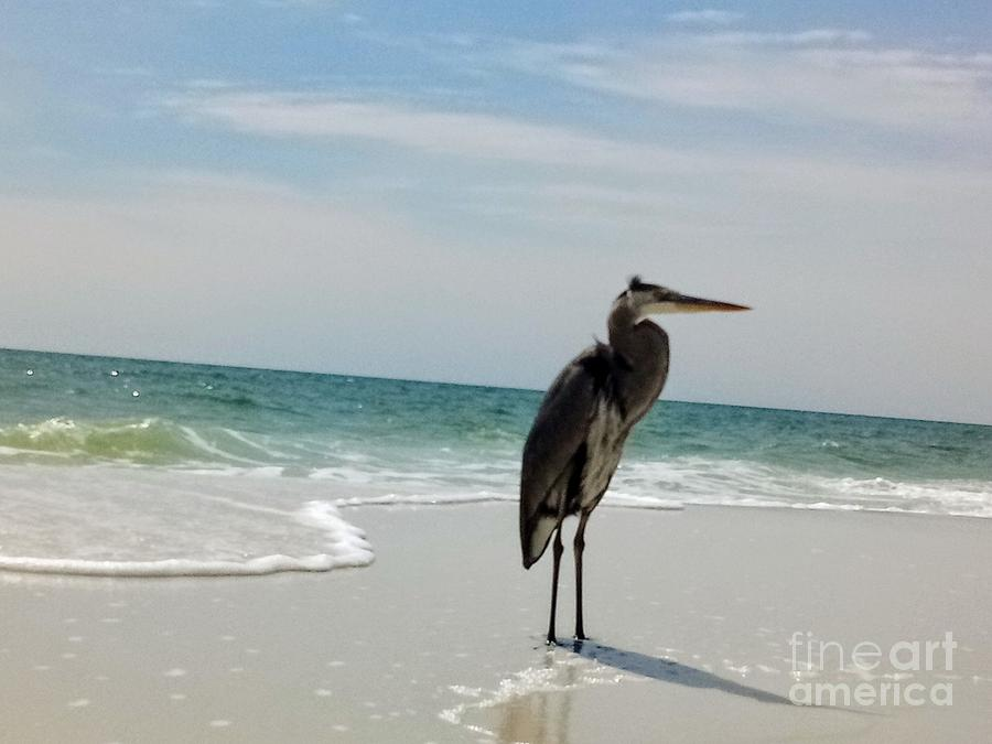 Sand, water, Bird by James and Donna Daugherty