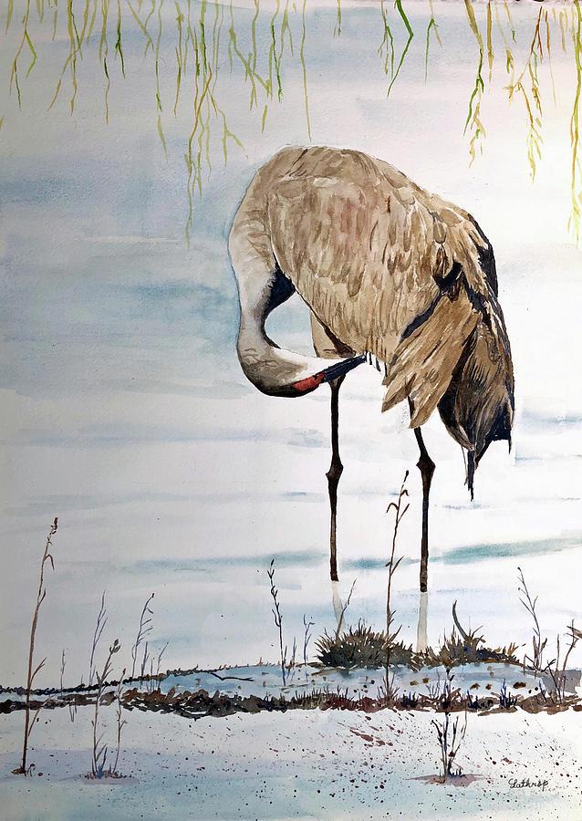 Sandhill Crane 2 by Christine Lathrop
