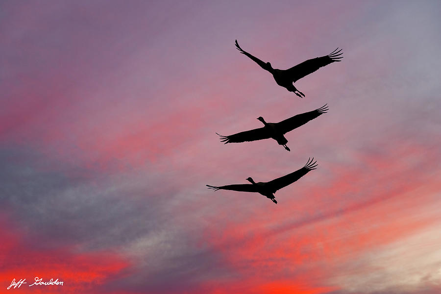 Sandhill Cranes at Sunset by Jeff Goulden