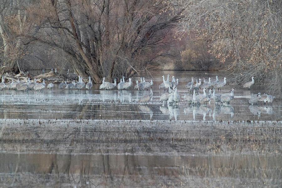 Bird Photograph - Sandhill Cranes At Waters Edge by Darrell Gulin