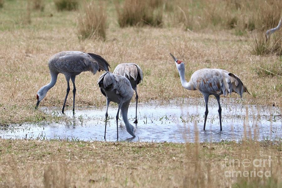 Sandhills Sip and See  by Carol Groenen