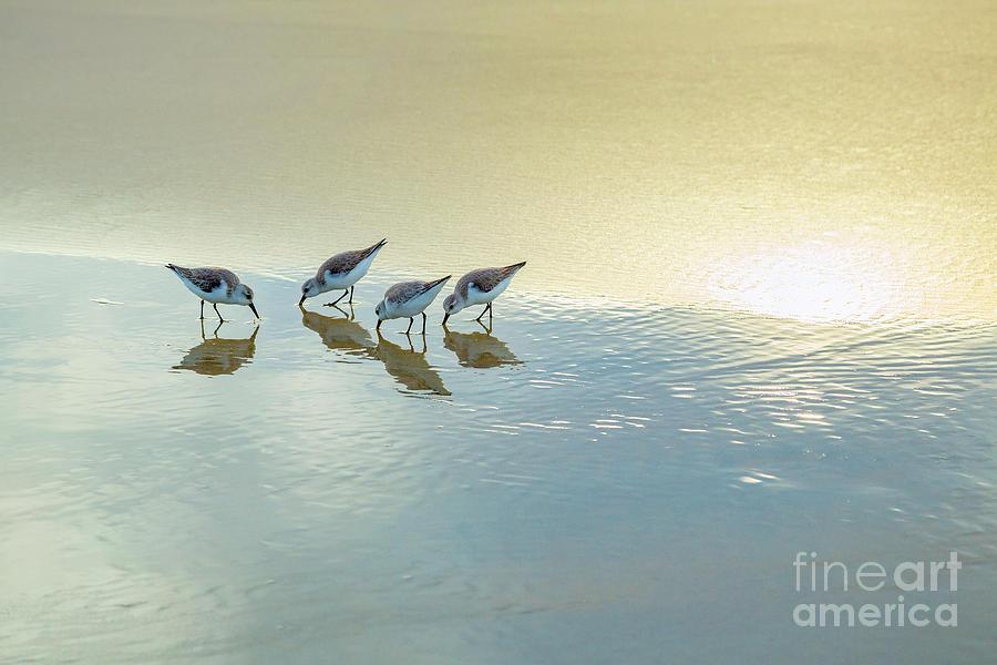 Nature Photograph - Sandpipers At La Jolla Shores Beach, La Jolla, California by Julia Hiebaum