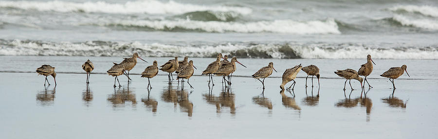 Sandpipers Piping by Bob Cournoyer