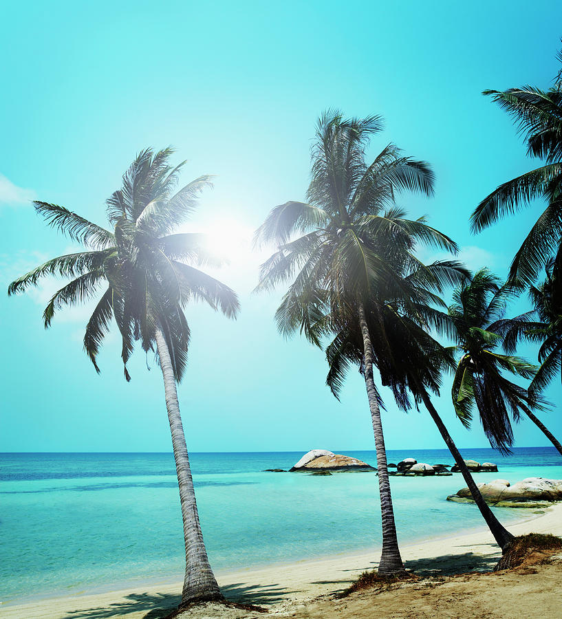 Sandy Beach With Palm Trees And Small Photograph by Henrik Sorensen