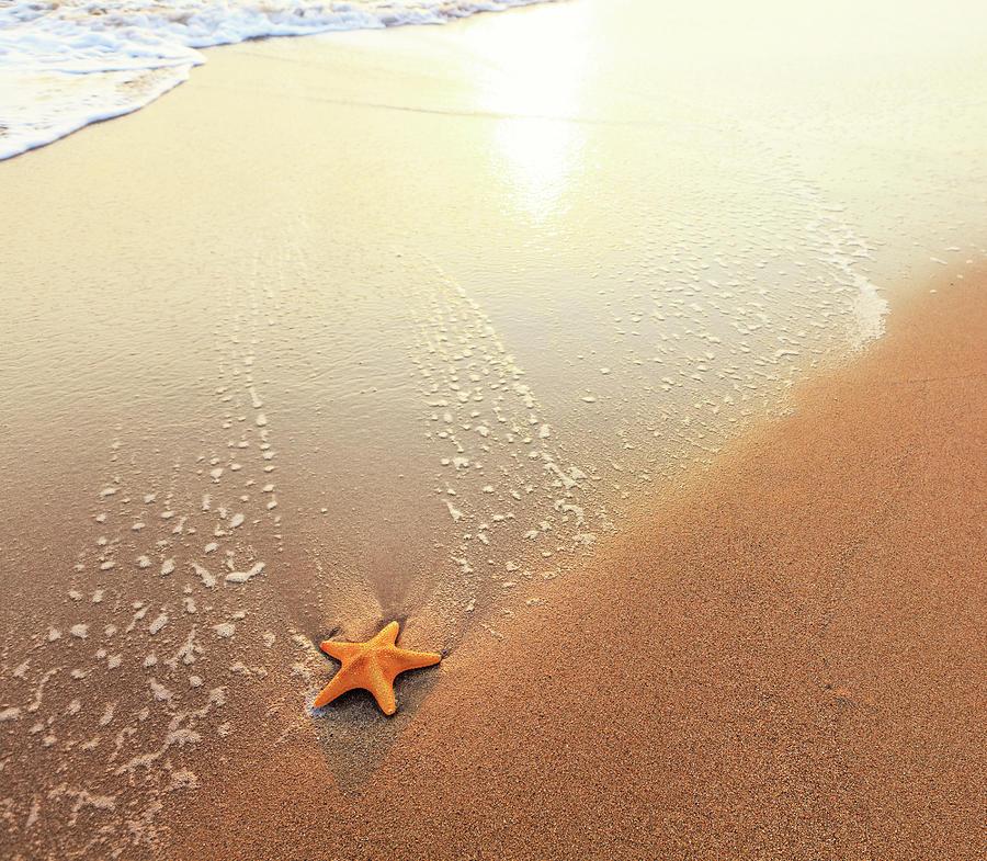 Sandy Beach: Sandy Beach With Starfish By Borchee