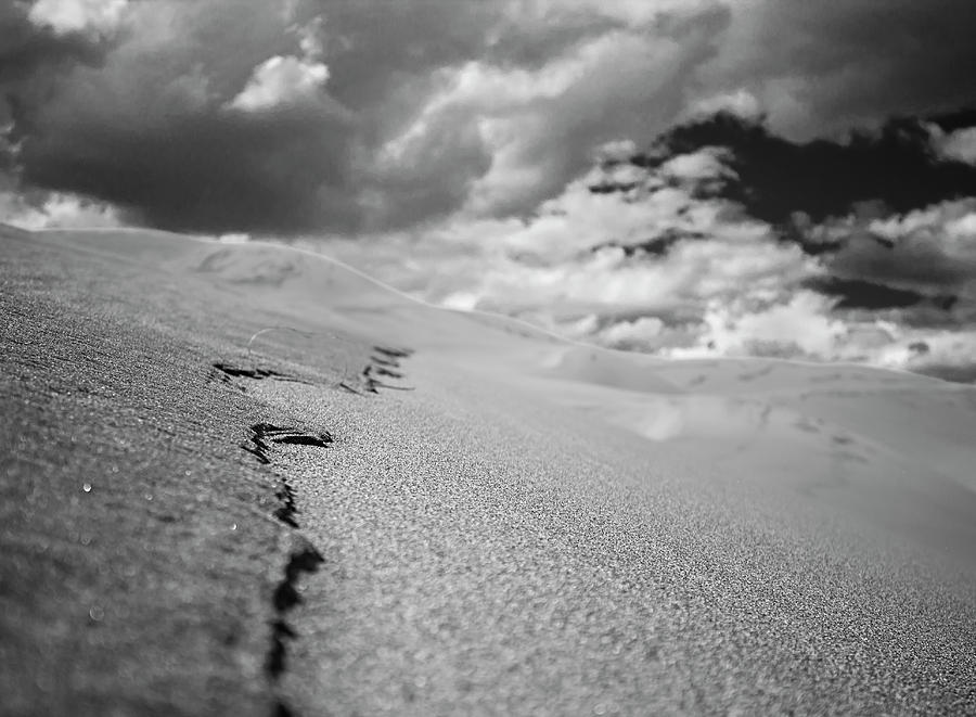 Sandy Lens by Stephen Riella