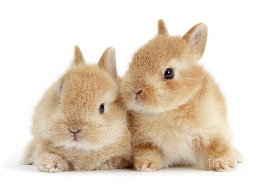 Sandy Love Bunnies by Warren Photographic