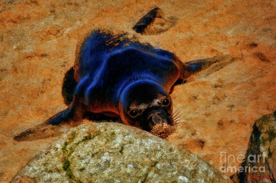 Sandy Nose Seal  by Blake Richards