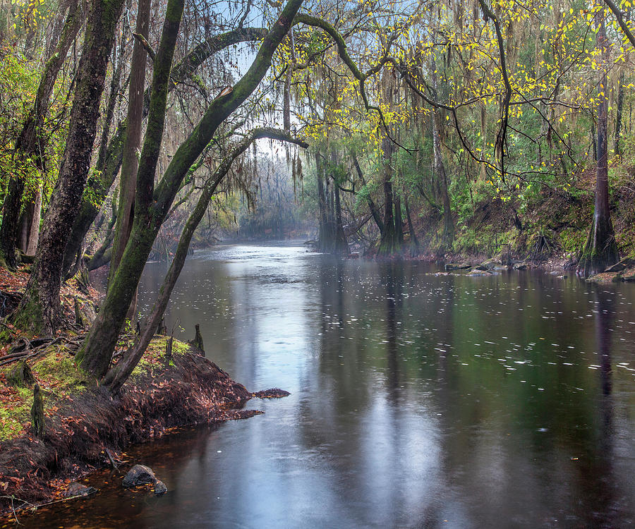 Santa Fe River, O'leno State Park, Florida by Tim Fitzharris
