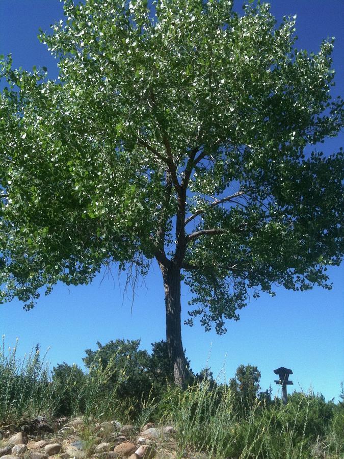 Tree Photograph - Santa Fe Tree 1 by Marty Klar