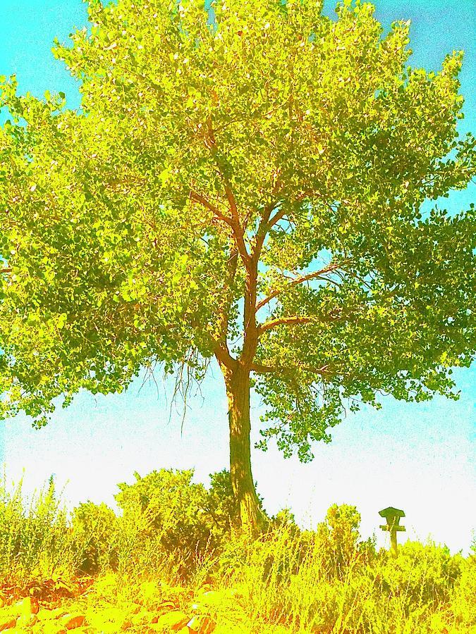 Tree Photograph - Santa Fe Tree 2 by Marty Klar