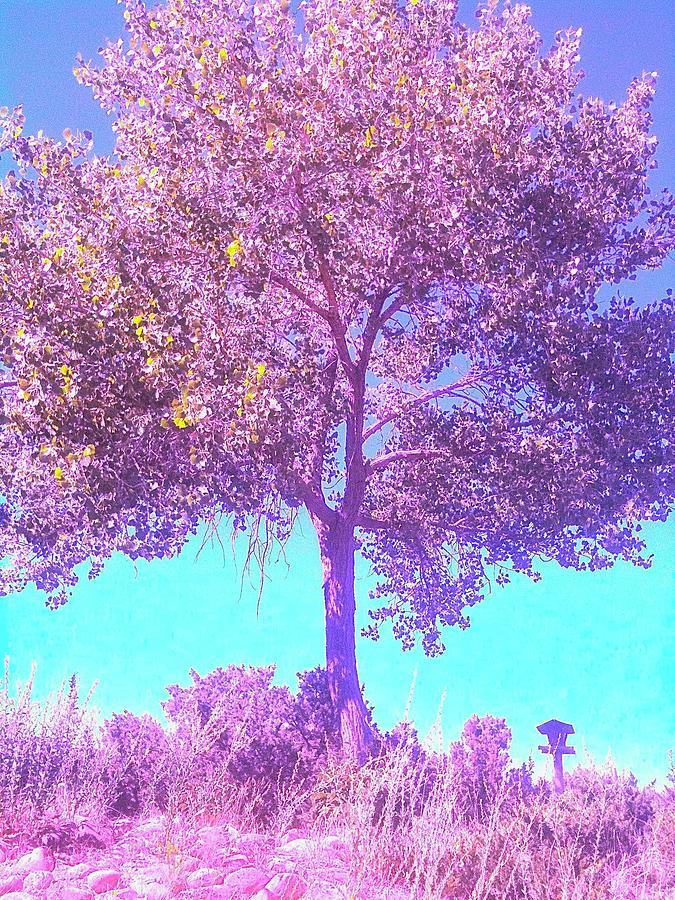 Tree Photograph - Santa Fe Tree 5 by Marty Klar