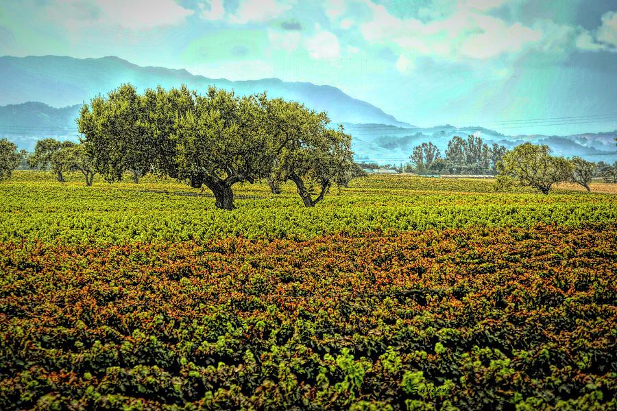 Santa Ynez Vineyard in Autumn by Floyd Snyder