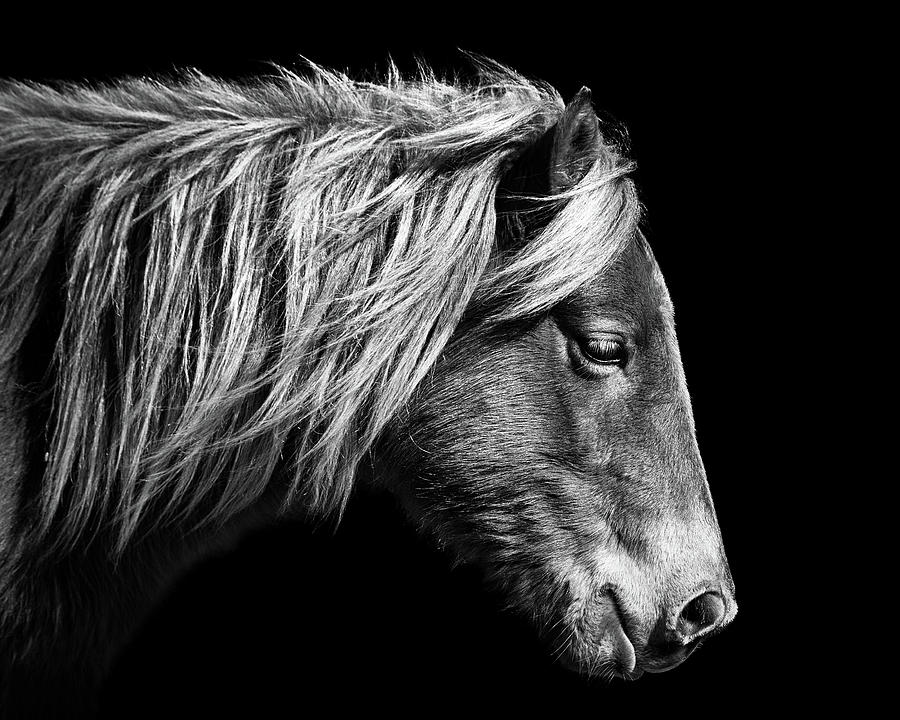 Sarah's Sweet Tea Portrait in Black and White by Assateague Pony Photography