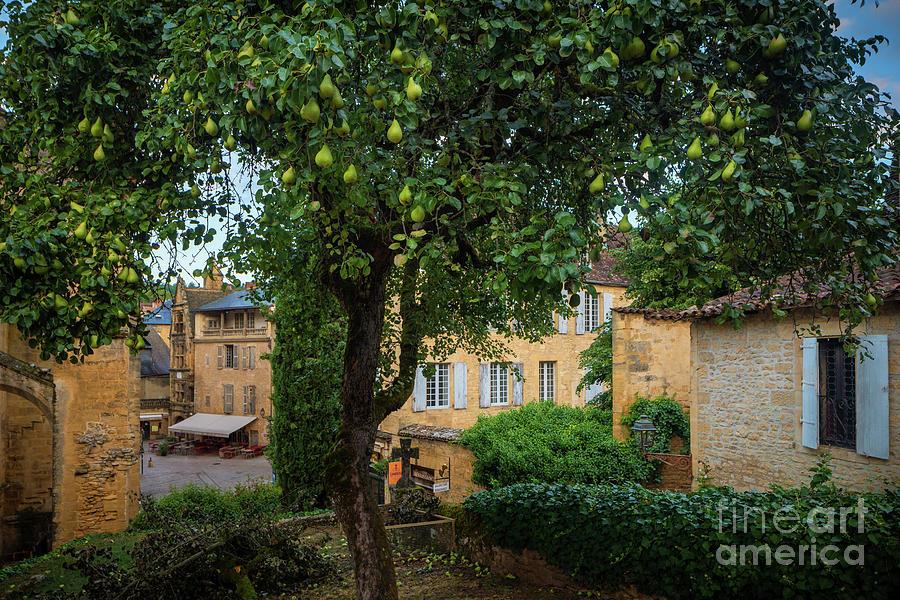 Catholic Photograph - Sarlat Pear Tree by Inge Johnsson