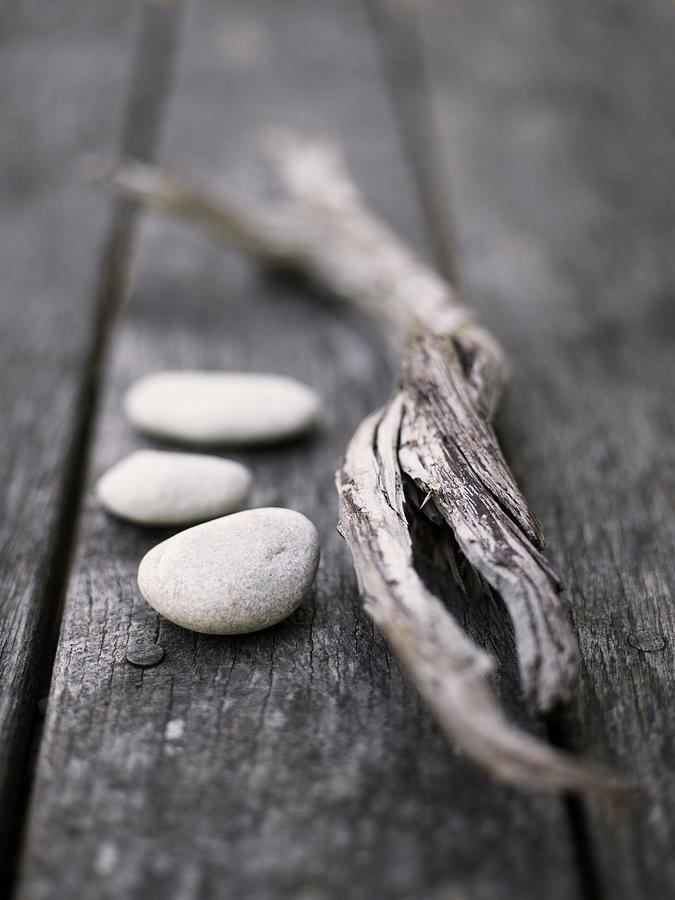 Scandinavia, Sweden, Gotland, Driftwood Photograph by Johner Images