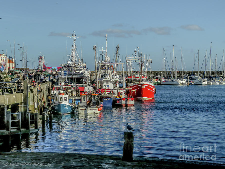 Scarborough Marina by Mandi Hibberd