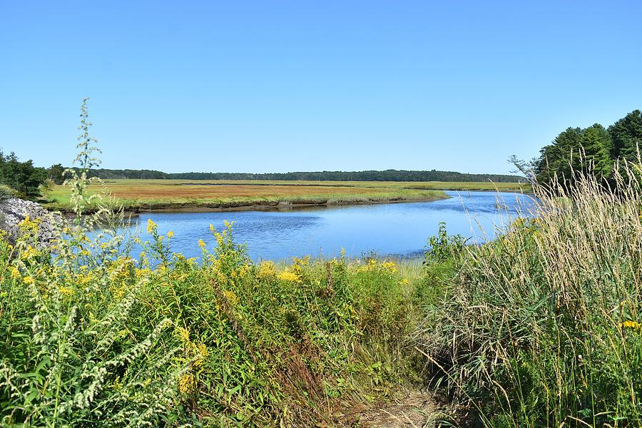 Scarborough Marsh 1 by Nina Kindred