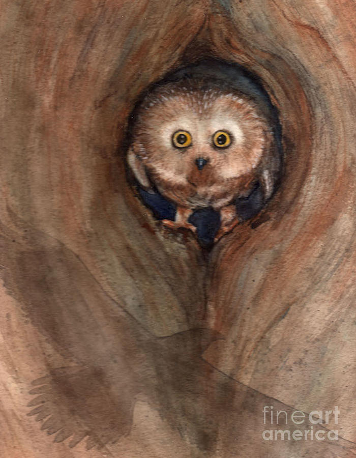 Scardy Owl by Amy Stielstra